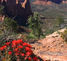 Indian Paintbrush in Colorado National Monument by Paul Gana