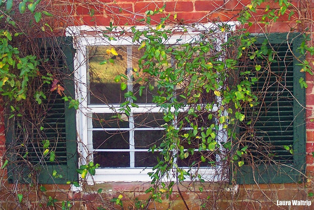 Window of Time by lwaltrip