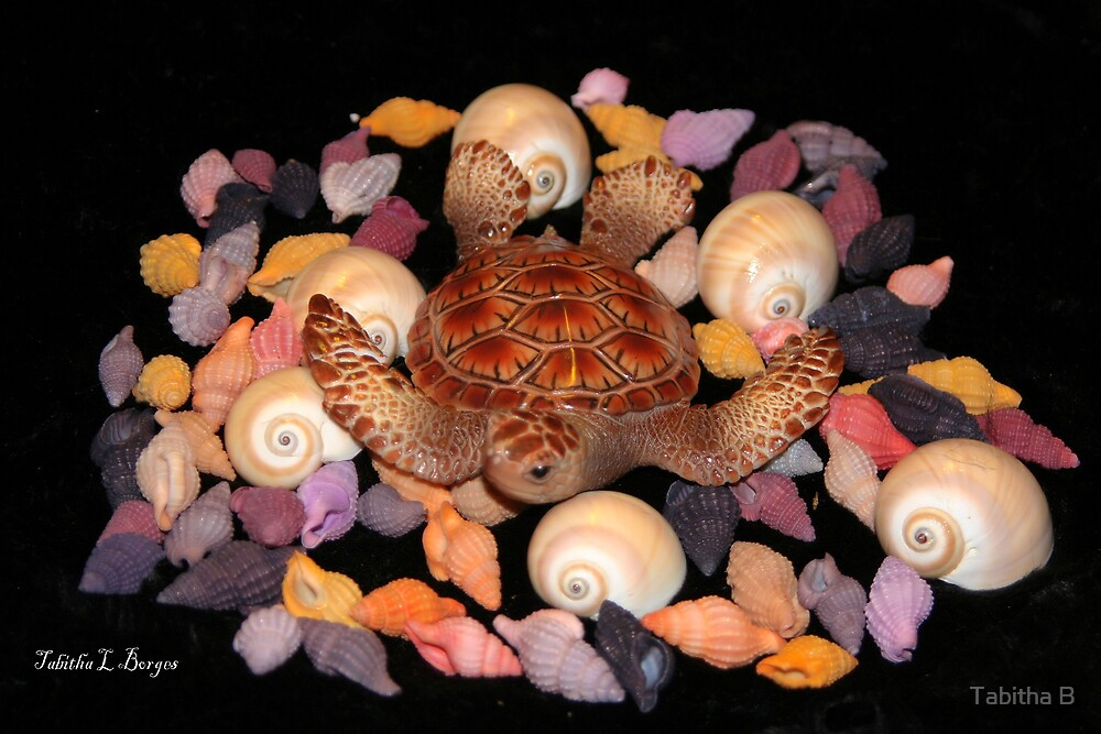 The Turtle And The Sea Shells  by Tabitha B