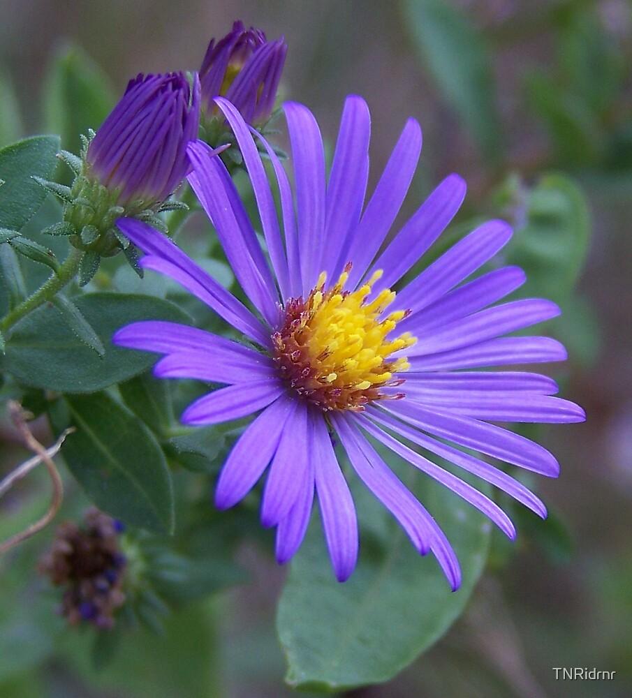 Wildflowers by TNRidrnr