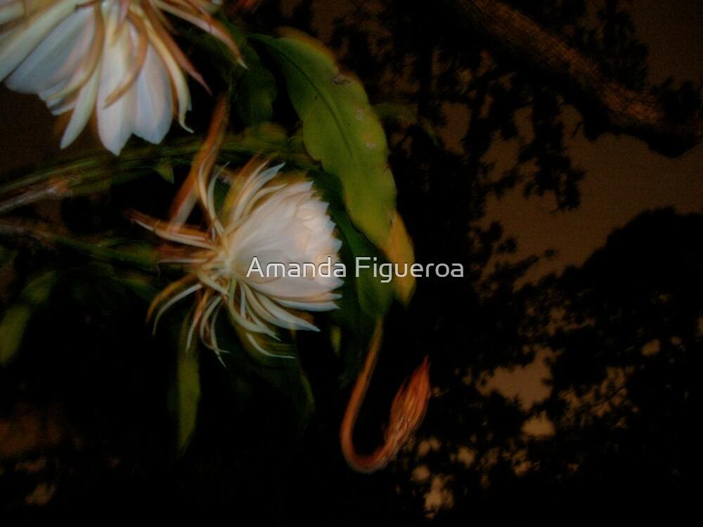 Night Blooming Cereus  by Amanda Figueroa