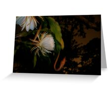 Night Blooming Cereus  Greeting Card