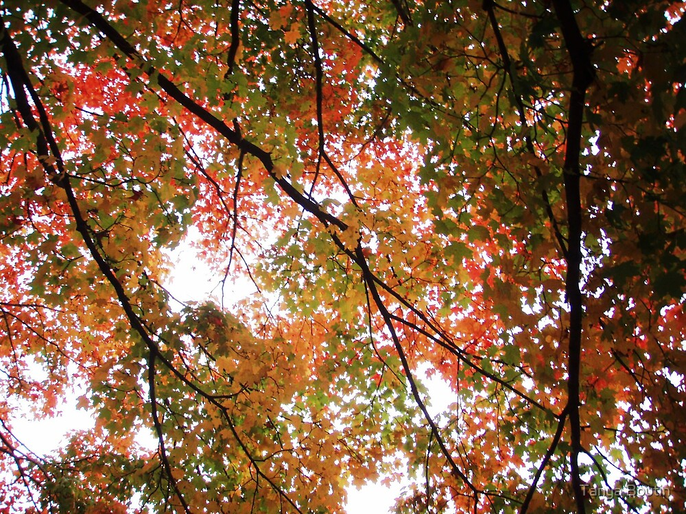 Autumn Leaves by Tanya Boutin