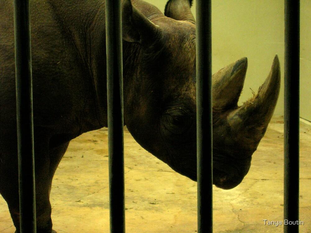 Rhino by Tanya Boutin