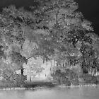 Light In The Oaks by Michael Reimann