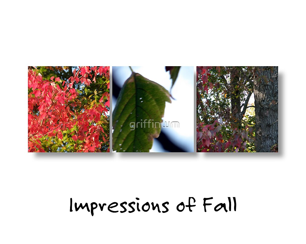 Impressions of Fall by griffinwm