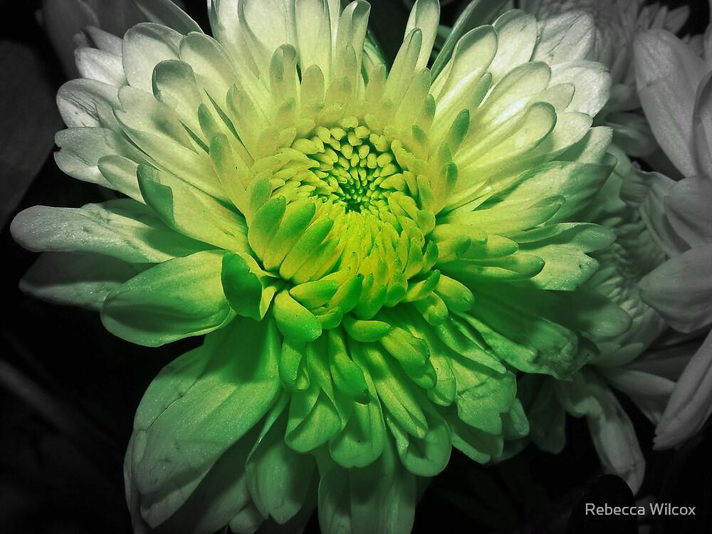 Go Green by Rebecca Brann