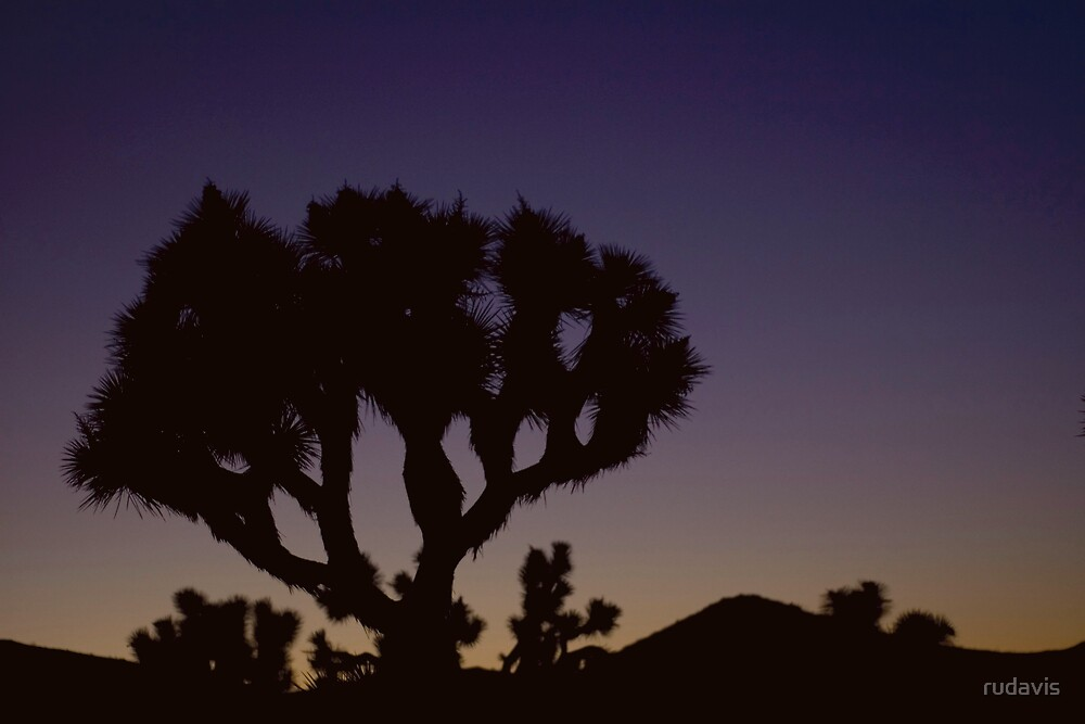 Joshua Tree at sunrise by rudavis