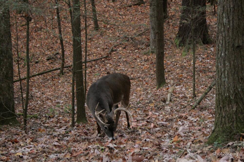 Whitetail Buck II ... Ten Pointer! by shotzbyjay