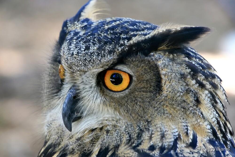 Eurasian Eagle Owl by Gregg Williams