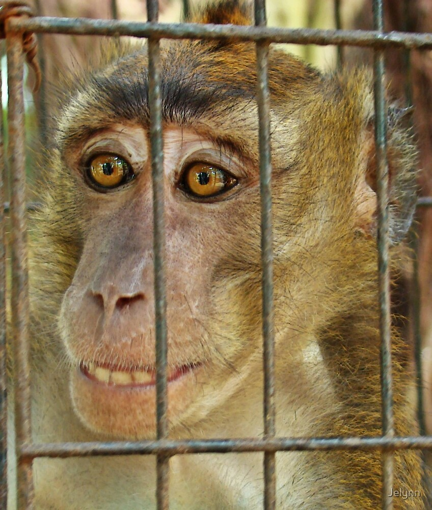 Monkey - behind the bars by Jelynn