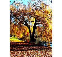 Autumn Hues Photographic Print