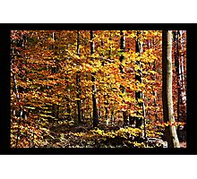 Golden October Photographic Print