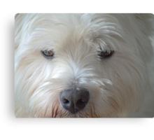 Brown eyed dog  Canvas Print