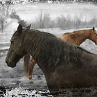 Two Horses by Pal Gyomai