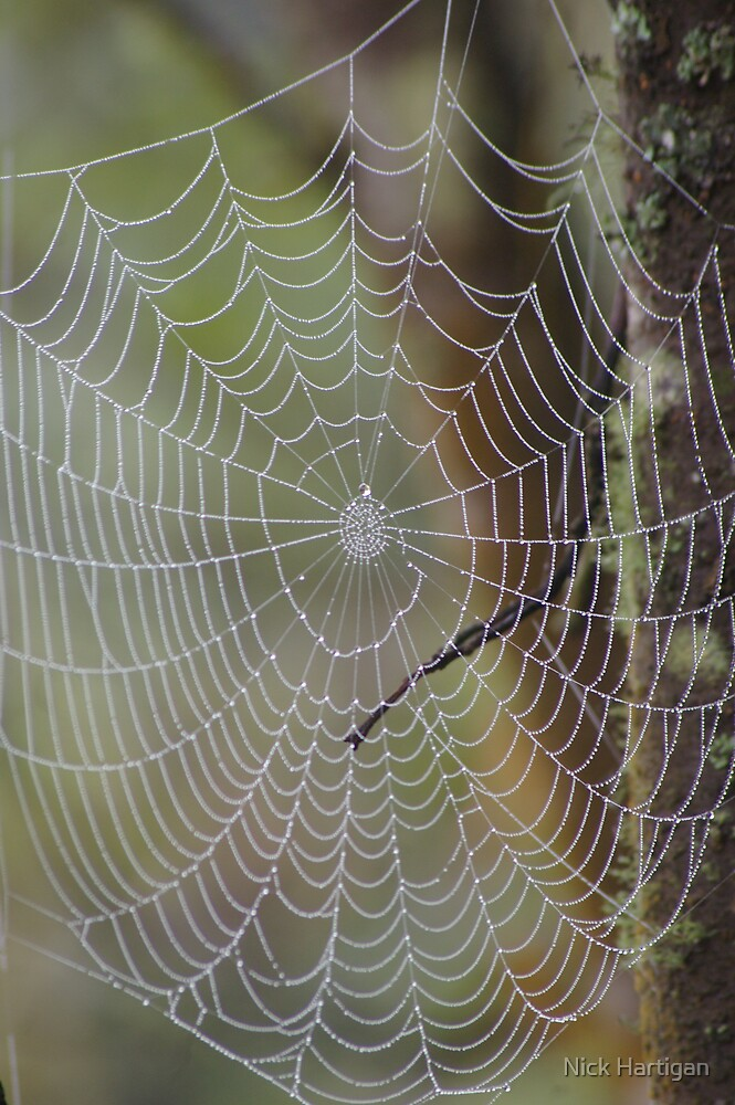Wet Web by Nick Hartigan