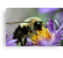 I'm glad I don't have pollen allergies! Canvas Print