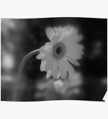 Beauty in Blk and Wht Poster