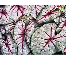 veins Photographic Print