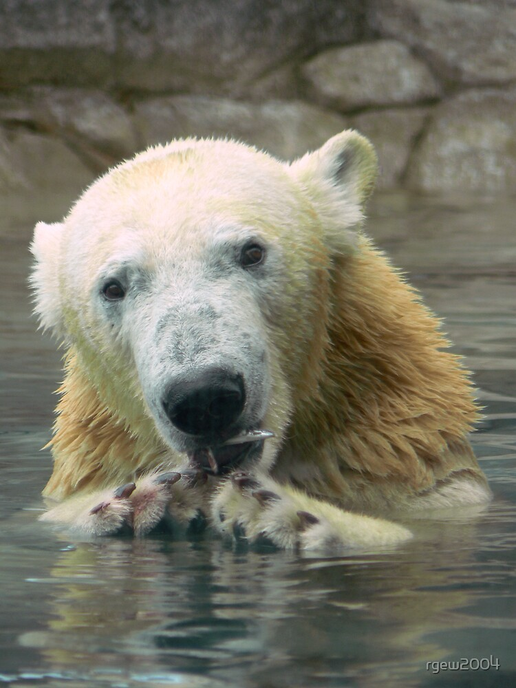 Polar Bear Snack by Greg Halliday