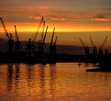 Cranes at Sunset by Martyn Robertshaw