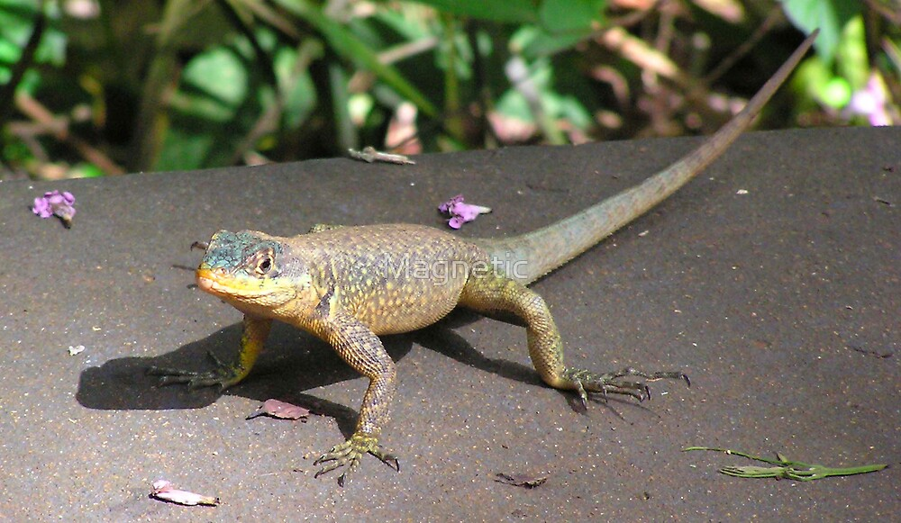 South American Lizard 1 by Magnetic