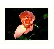 Rose in the light Art Print