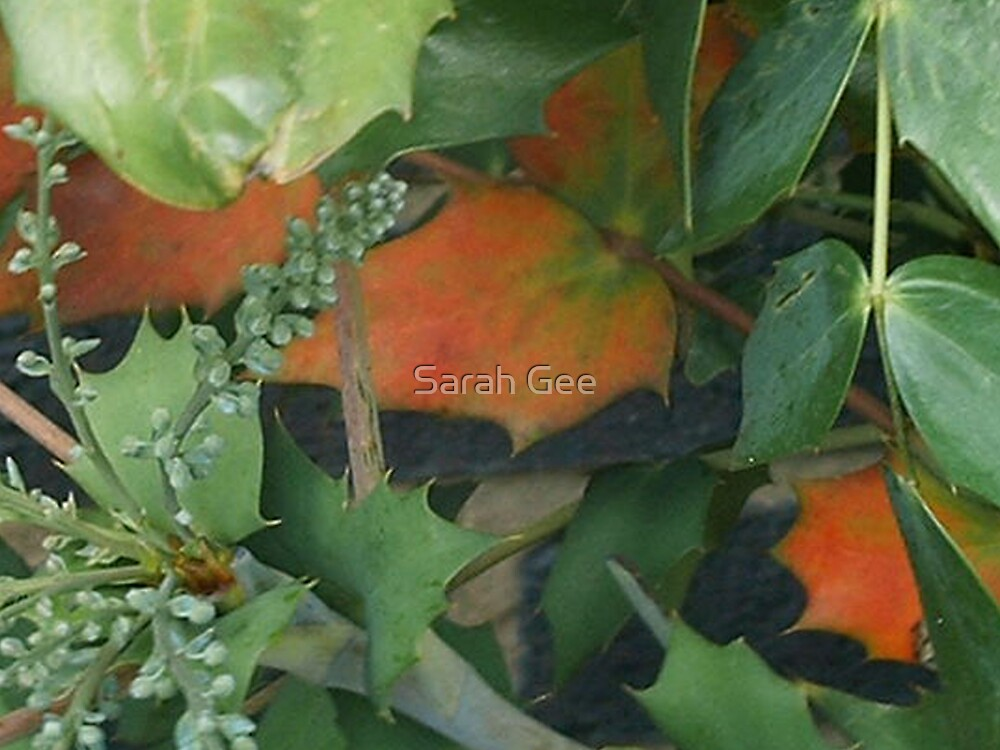 Autumn begins by Sarah Gee