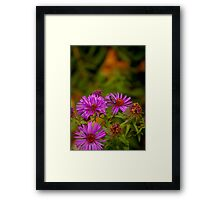 Flying Insect on Purple Flower Framed Print