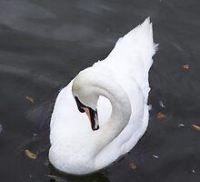 swan by jayPjay