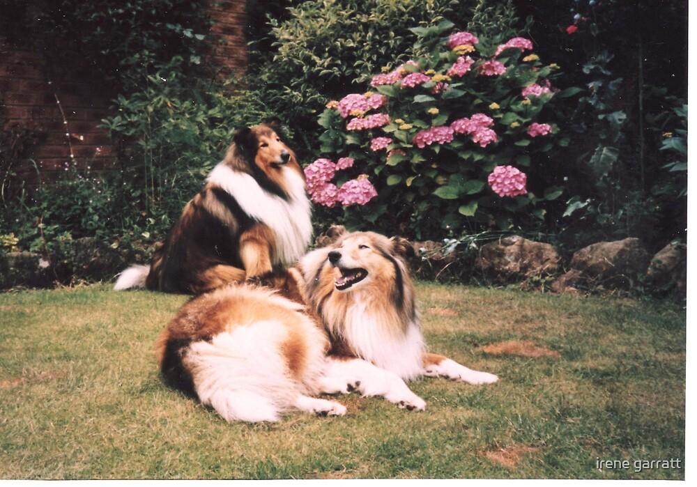 THE TALE OF TWO DOGS by irene garratt