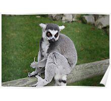 Photogenic Lemur Poster