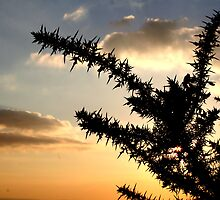Silhouette of a throny Bush by mattaylorphotography