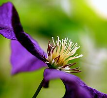 Purple Macro by Robin Fortin IPA