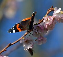 Bee and Butterfly on Blossom.............. by lynn carter