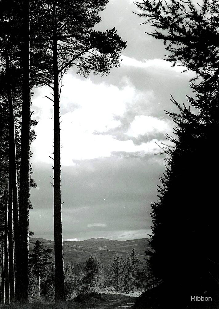 Landscape by Ribbon