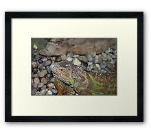 Reptile in Full Colour Framed Print