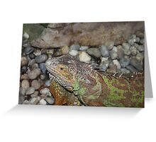Reptile in Full Colour Greeting Card