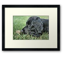 Someday My Prince Will Come.... Framed Print