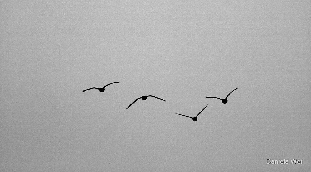 Flying  high by Daniela Weil