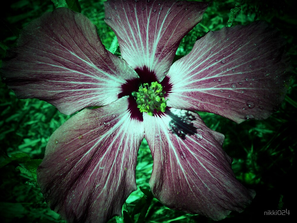 THE HIBISCUS by nikki024