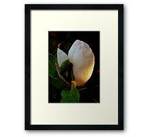Magnolia Sunrise Framed Print