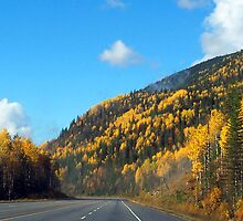 Fall Colours  by Tina Renaud