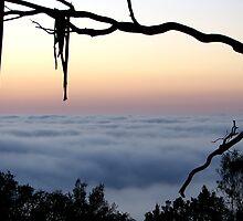 Framed Fog - Mount Barker Summit by Leeo
