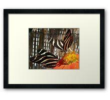 FLOWER FIGHT Framed Print