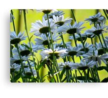 End of Summer, White Daisies II  (1407070407VA) Canvas Print