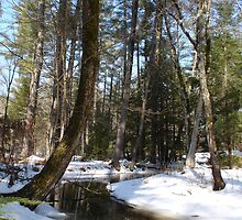 Winter Woods in New Hampshire by probono