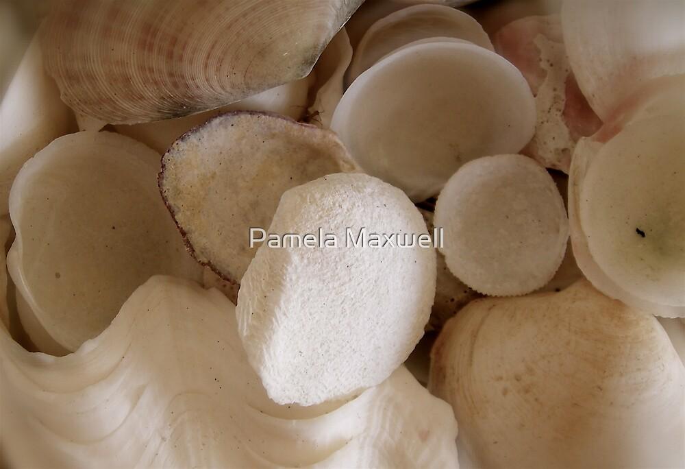 She Sells Sea Shells by the Sea Shore by Pamela Maxwell