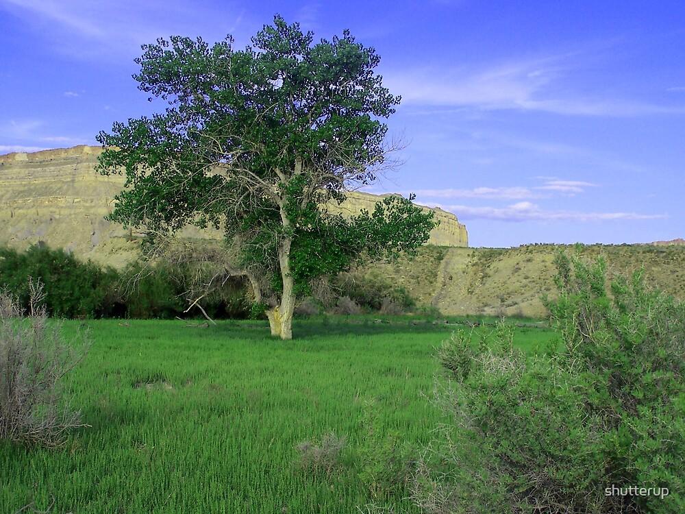 Cottonwood Tree by shutterup