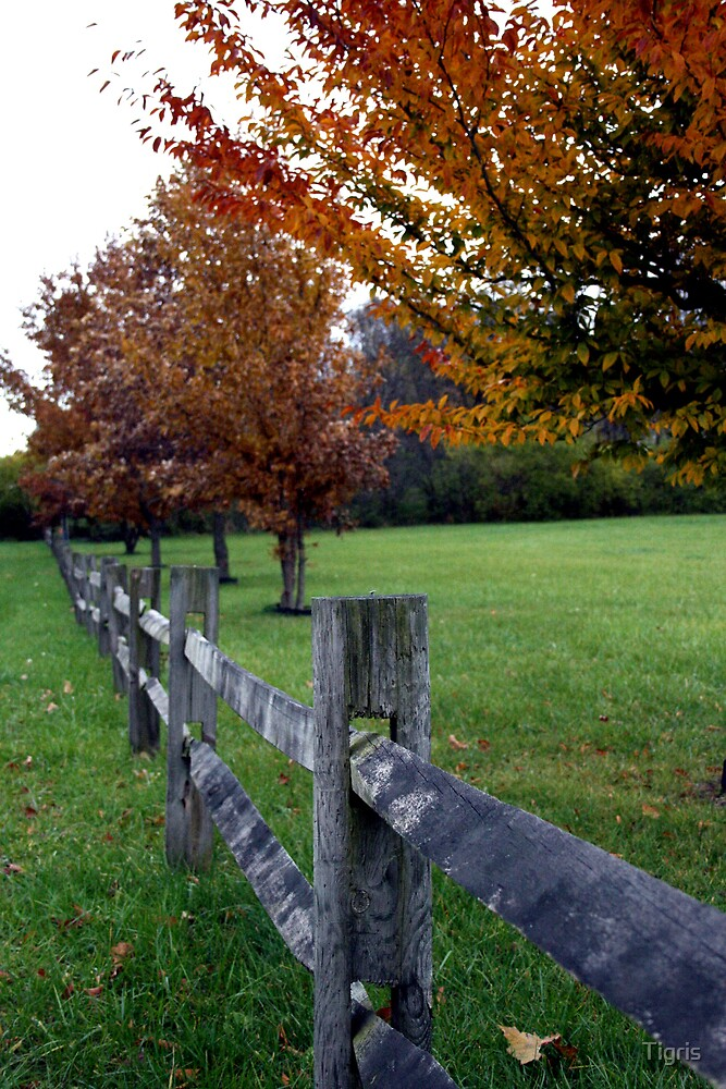 Fall Fences by Tigris